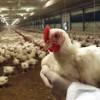 Nuove norme per contrastare le malattie animali trasmissibili
