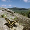 La biodiversità italiana