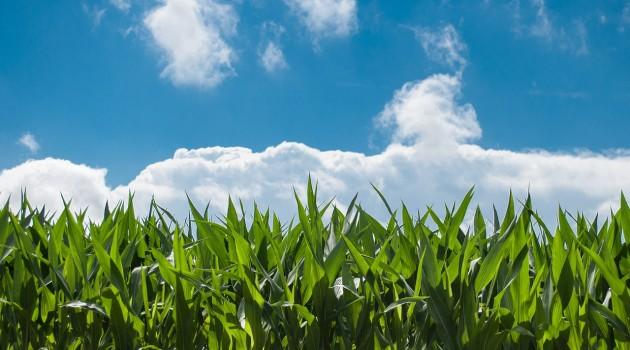 FEASR Lazio: Sostegno ai giovani agricoltori