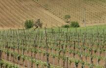 PSR FEASR Lazio: supporto a progetti di filiera organizzata