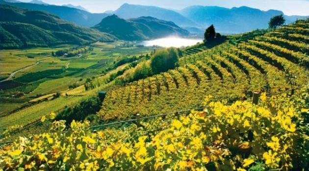 PSR Campania 2014-2020: Supporto all'innovazione dei processi produttivi delle aziende agroindustriali