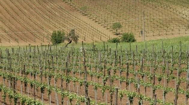 Piano Nazionale di Sostegno al settore vitivinicolo: il bando della Regione Campania