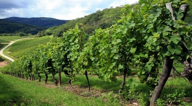 OCM Vino: bando della Regione Lazio per la promozione in Paesi terzi